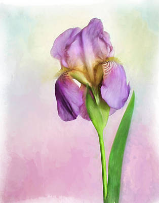 Photograph - Purple Iris by David and Carol Kelly