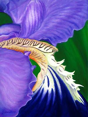 Painting - Purple Iris by Jeannette Tramontano
