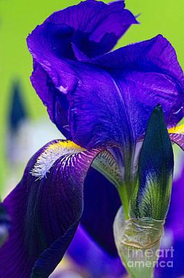 Iris Digital Art - Purple Iris Macro With Texture by Sharon Talson
