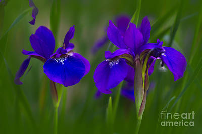Catch Of The Day - Purple Iris by Todd Bielby