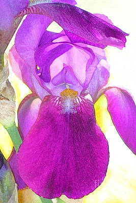 Purple Iris Watercolor Art Print by Karen Adams