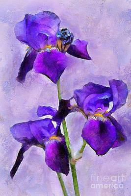 Purple Irises - Painted Art Print