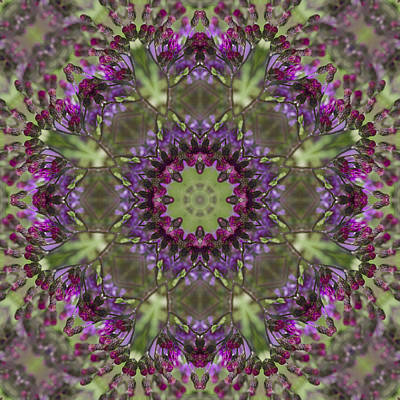 Purple Ironweed Kaleidoscope Art Print by Kathy Clark