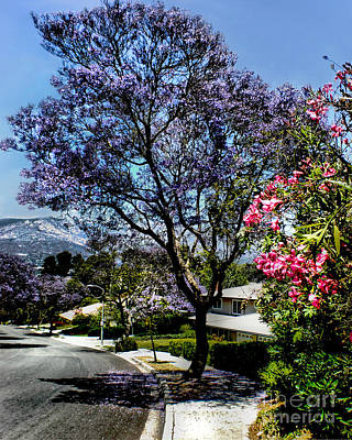 Photograph - Purple Jacaranda   by Danuta Bennett