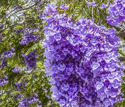 Digital Art - Purple Jacaranda  by Photographic Art by Russel Ray Photos