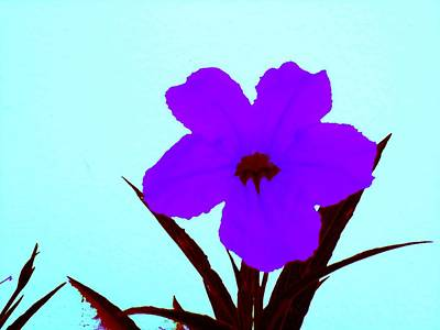 Digital Art - Purple Jack Flower by David Clark