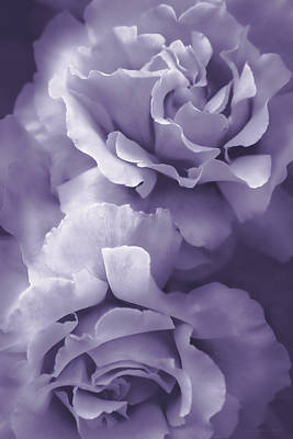 Photograph - Purple Lavender Roses by Jennie Marie Schell
