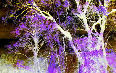 Purple Leaves And White Trees Art Print