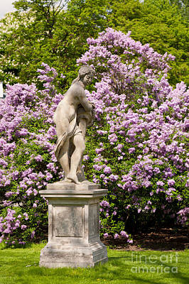 Purple Lilac And Naked Woman Statue  Print by Arletta Cwalina