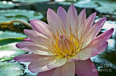 Photograph - Purple Lotus Flower by Valerie Garner