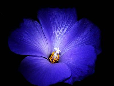 Stamen Digital Art - Purple Magic by Camille Lopez