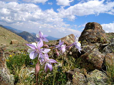 Photograph - Purple Mountain Majesty  by Alan Johnson