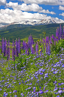 Photograph - Purple Mountain Majesty by Bill Singleton