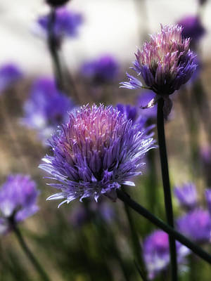 Photograph - Purple N Pretty by Maureen Cunningham