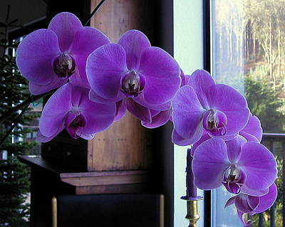 Print featuring the photograph Purple Orchid by AJ  Schibig