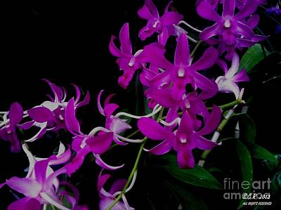 Purple Orchid Flower By Saribelle Rodriguez Art Print