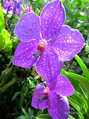 Golden Pink Orchid Photograph - Purple Orchid Flower by Lanjee Chee