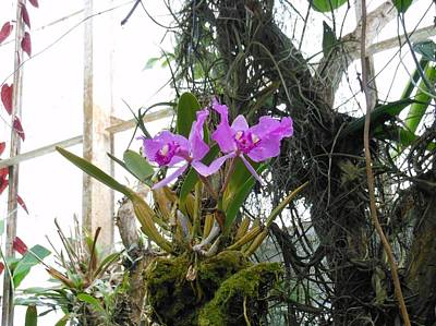 Purple Orchid Art Print by Kay Gilley