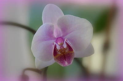 Photograph - Purple Orchid by Linda Larson