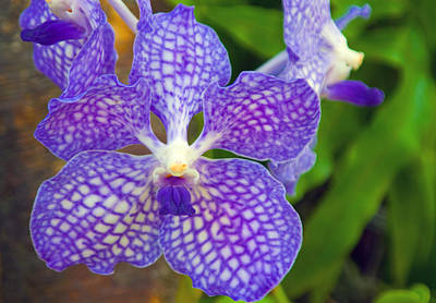 Dendrobium Photograph - Purple Orchid by Matthew Bamberg