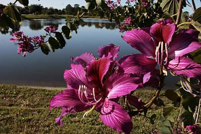 Purple Orchid Tree  Art Print by Regina  Williams