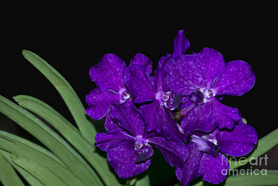 Photograph - Purple Orchids by Bill Woodstock