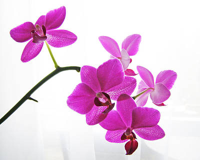 Digital Art - purple orchids II by Jane Schnetlage