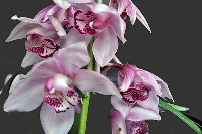 Purple Orchids Art Print by Judith Russell-Tooth