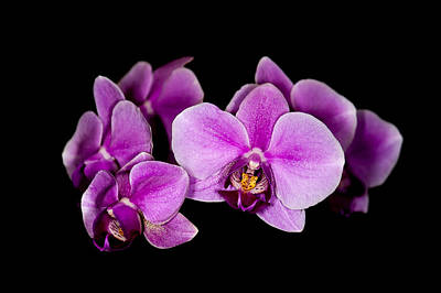 Photograph - Purple Orchids by Len Romanick