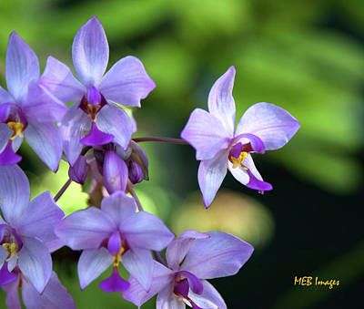 Photograph - Purple Orchids by Margaret Buchanan