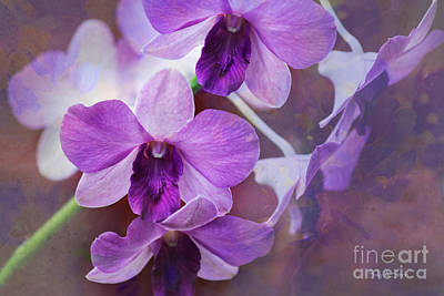 Photograph - Purple Orchids by Sally Simon
