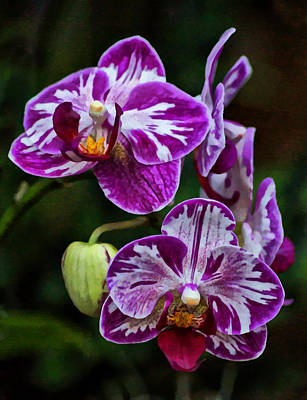 Photograph - Purple Orchids by Sandy Keeton