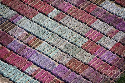 Purple Palette Art Print by John Ferrante
