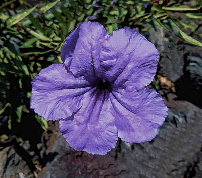Mixed Media - Purple by Pamela Walton