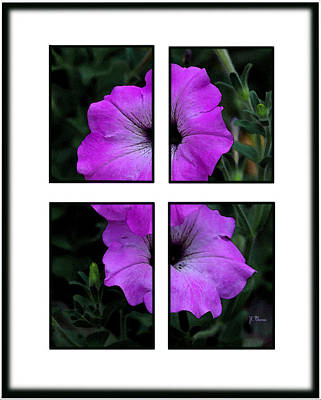 Photograph - Purple Pansies by James C Thomas