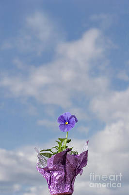 Photograph - Purple Pansy And Cloudscape Sky by Cindy Singleton