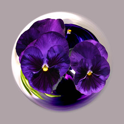 Photograph - Purple Pansy Ball by Jim Baker