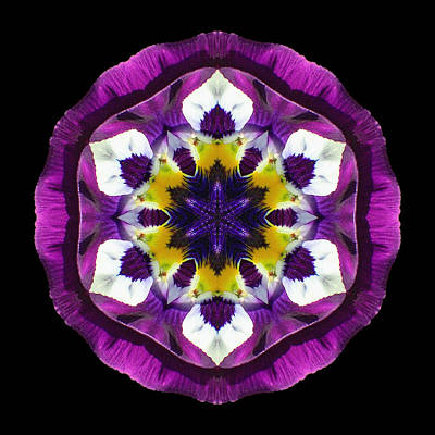 Purple Pansy II Flower Mandala Art Print