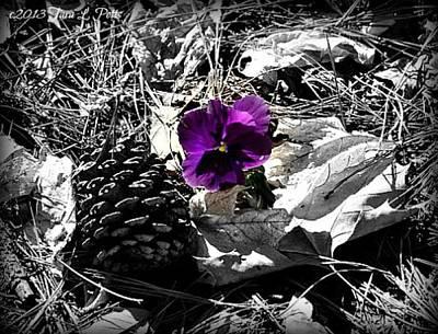 Art Print featuring the photograph Purple Pansy by Tara Potts