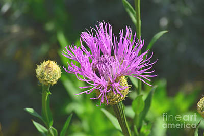 Photograph - Purple Passion by Derry Murphy