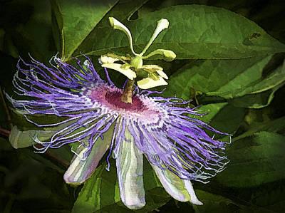 Purple Passion Print by Kathy Clark