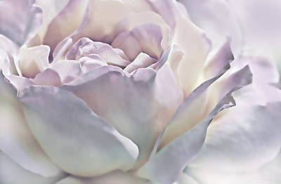 Photograph - Purple Passion Pastel Rose Flower by Jennie Marie Schell
