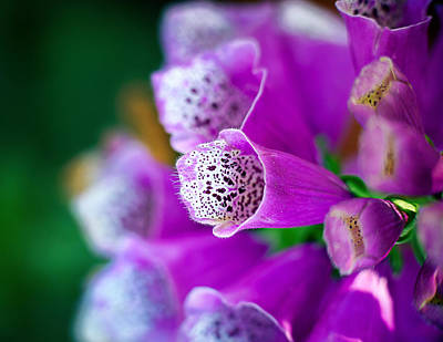 Photograph - Purple Passion by Tammy Smith