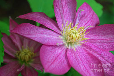 Photograph - Purple Passion by Terri Oberg