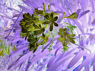 Photograph - Purple Passion by Tom Kelly