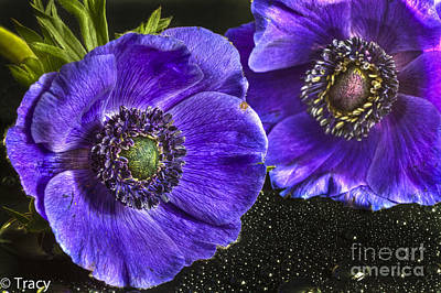 Purple Passion Art Print by Tracy  Hall