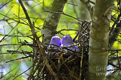 Al Powell Photograph - Purple Peeps Pair by Al Powell Photography USA