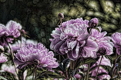 Photograph - Purple Peonies by Brian Davis