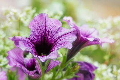 Purple Flowers Digital Art - Purple Petunia Dream by Bill Tiepelman