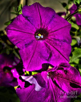 Photograph - Purple Petunia Flower by Nina Ficur Feenan